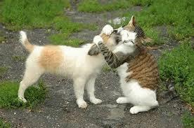 Feline Life Lesson #9 - Forgive